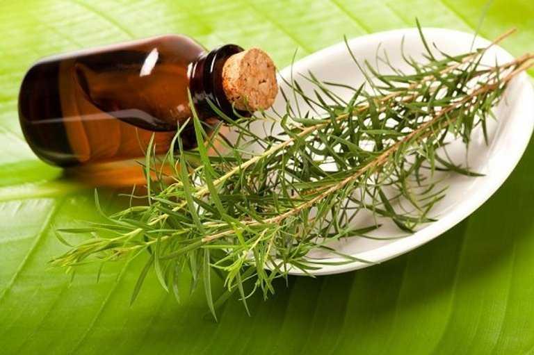 масло чайного дерева от молочницы