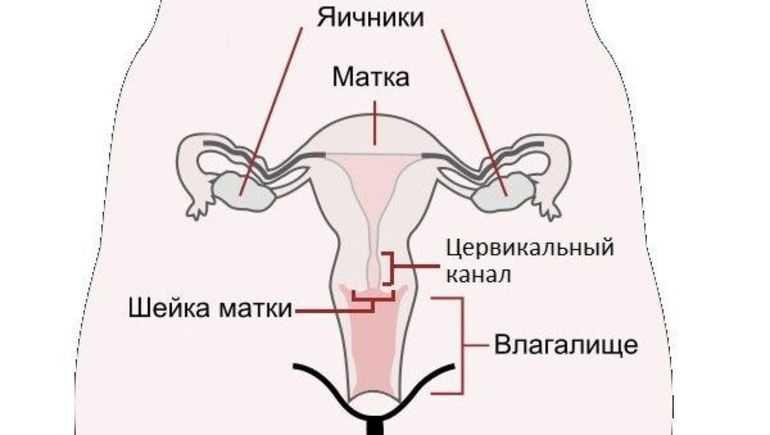 Болит шейка матки