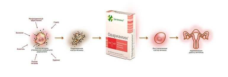 Овариамин для женщин