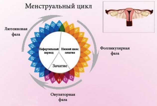 Техника диатермокаутеризация яичников при синдроме поликистозных яичников