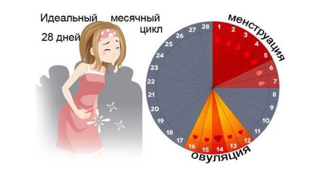 Месячные или имплантационное кровотечение