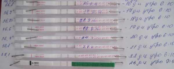 Много тестов на беременность