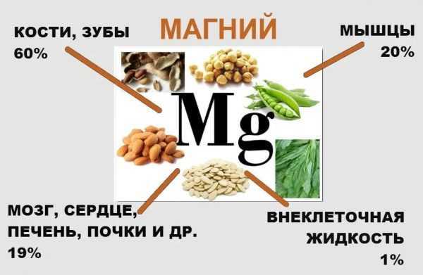 Содержание магния в тканях и органах человека