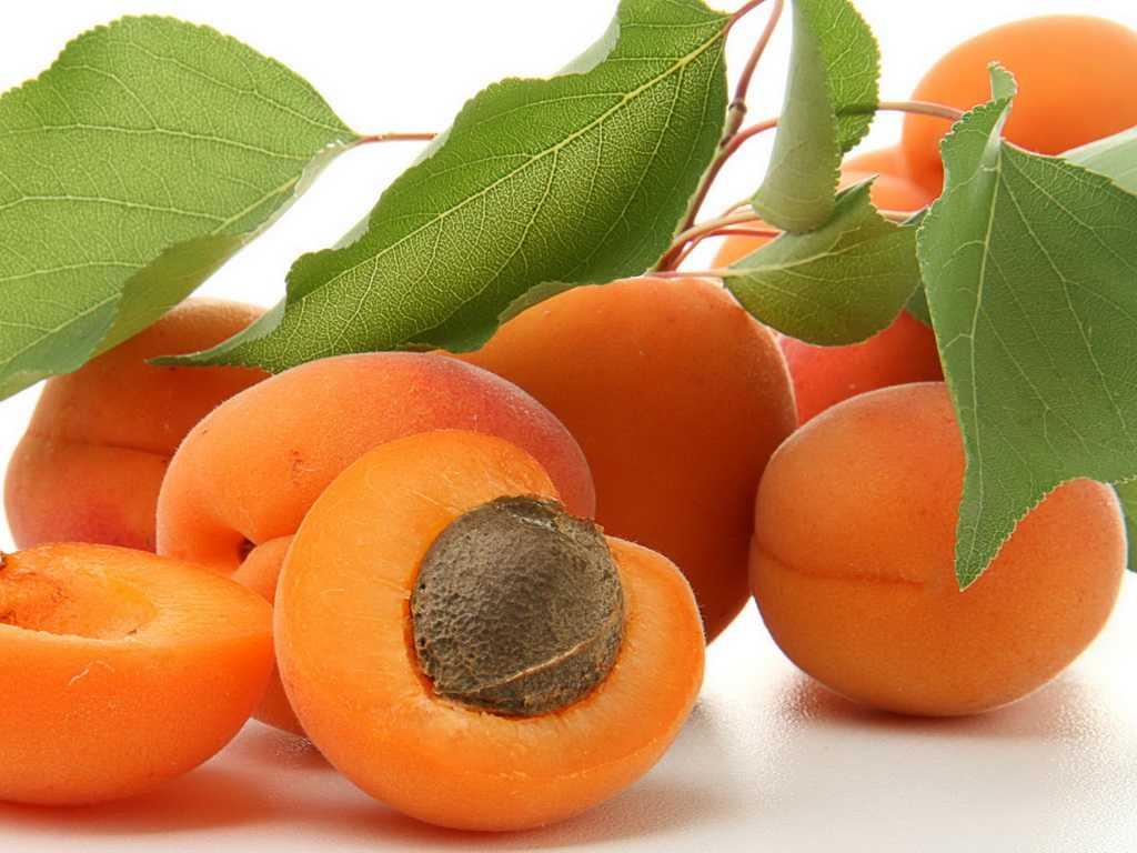 абрикосы сушатся