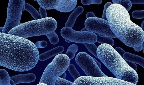 Бактериальная микрофлора