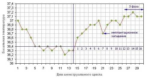 График базальной температуры во время менструального цикла и после зачатия