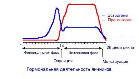 График эстрогена и прогестерона в менструальном цикле