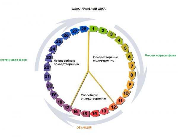 Изображение менструального цикла женщины