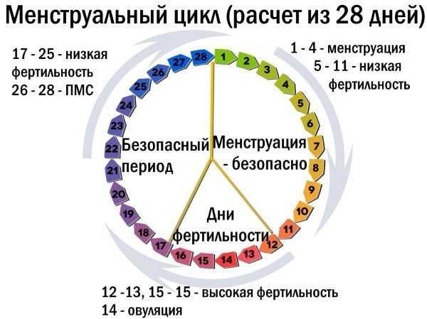 Менструальный цикл: схема