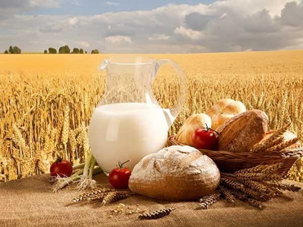 Молоко и пшеница