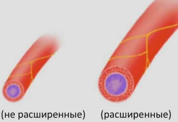 Нерасширенный и расширенный кровеносные сосуды