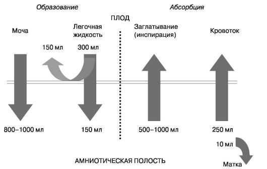 Механизмы, влияющие на объем амниотической жидкости