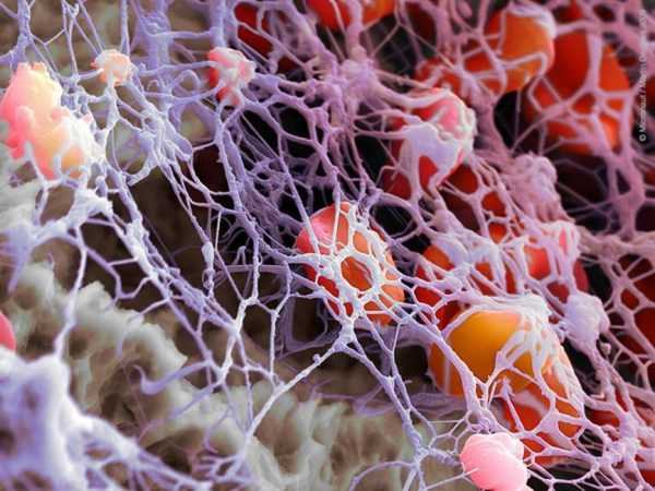 фибрин на схеме