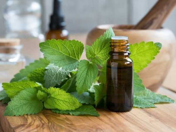 Эфирное масло мелиссы в пузырьке и листья растения