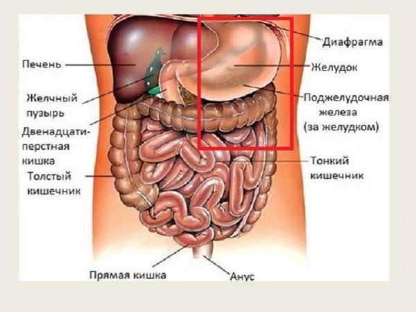 Органы брюшной полости человека, верхний левый квадрат выделен красной рамкой