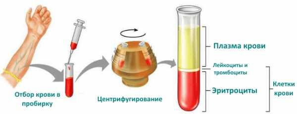 Последовательность определения гематокрита в крови