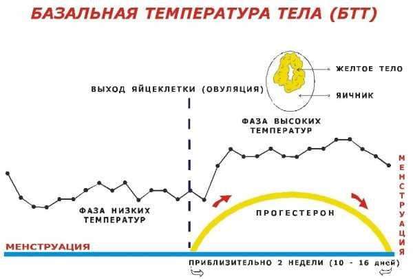 График базальной температуры тела