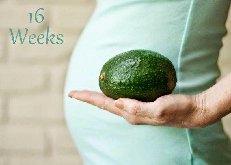 16 недель