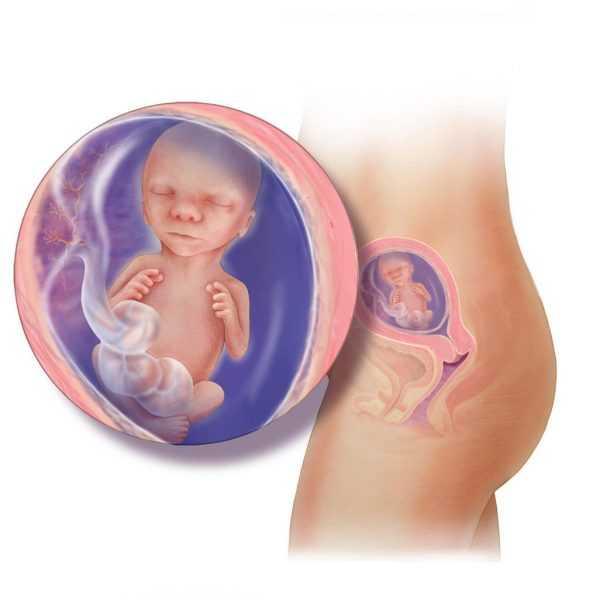 Ребёнок в утробе матери