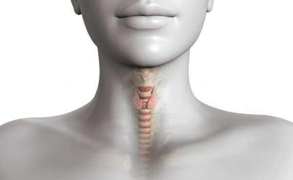 щитовидная железа у женщины на схеме