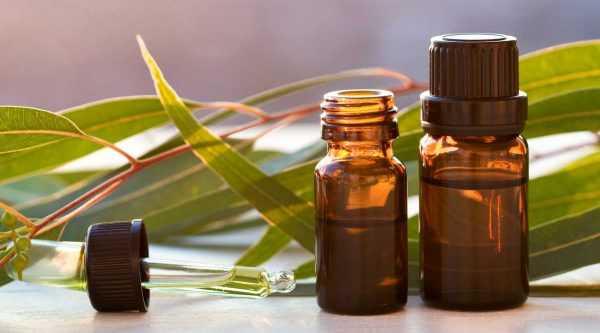 Листья эвкалипта и флаконы с маслом