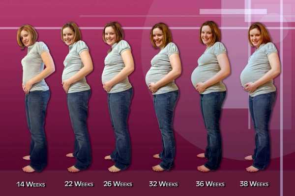 Живот беременной по месяцам